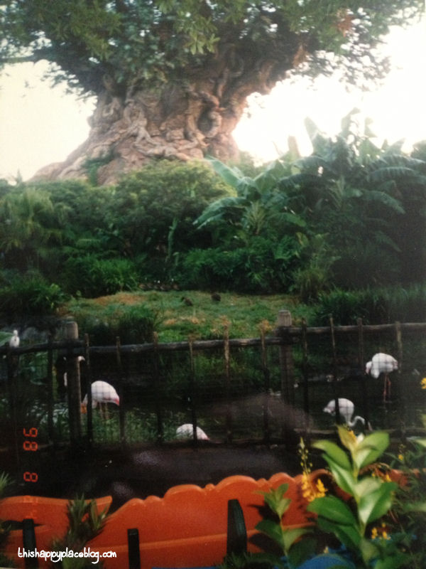 Animal Kingdom Tree of Life 1998
